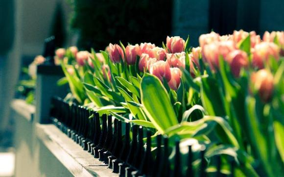 pictures-of-spring-flowers-19